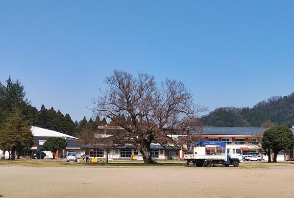 桜のメンテンナンス