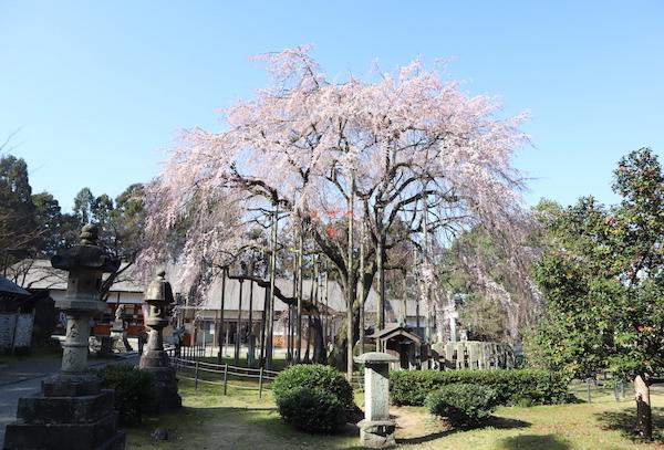 足羽神社2020年