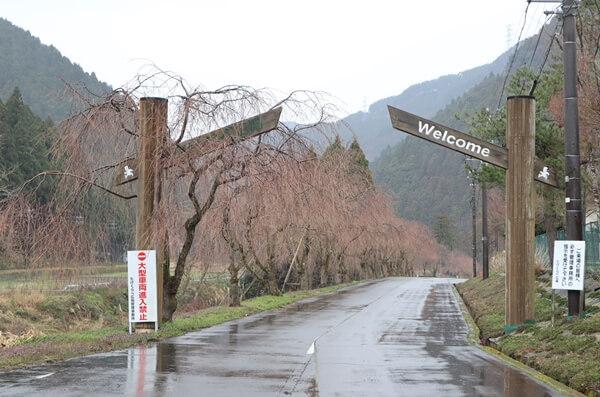 2020年の竹田の桜