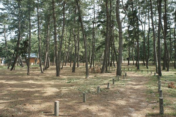 気比の松原