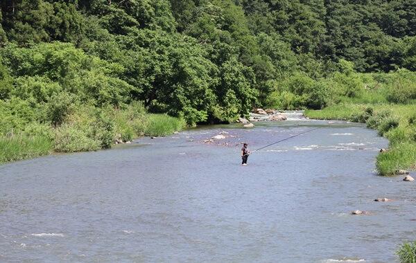 日野川の鮎の友釣り
