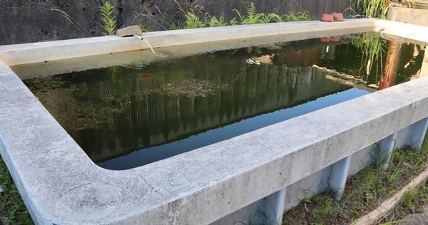 トミヨの水槽