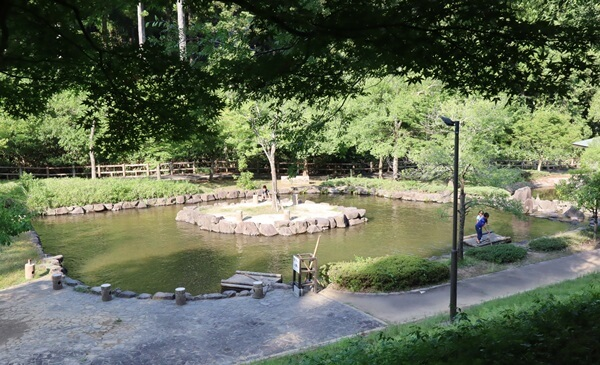イカダの池