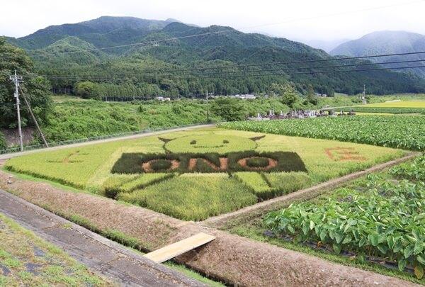 大野の田んぼアート