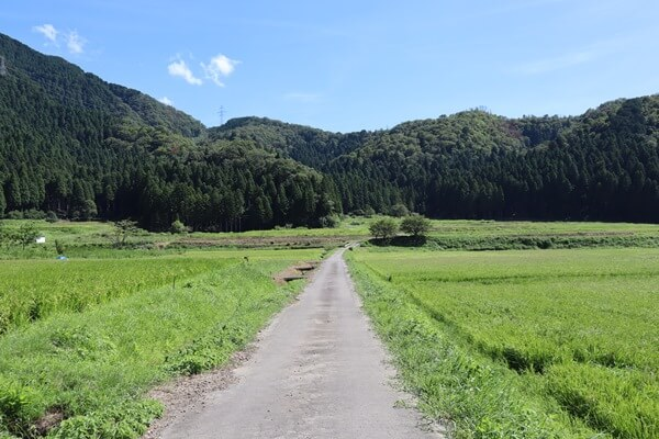 田んぼの中の道