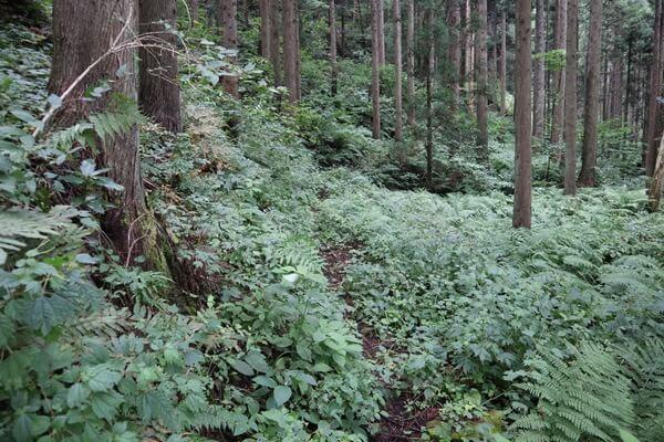 木の実谷コースの登山道