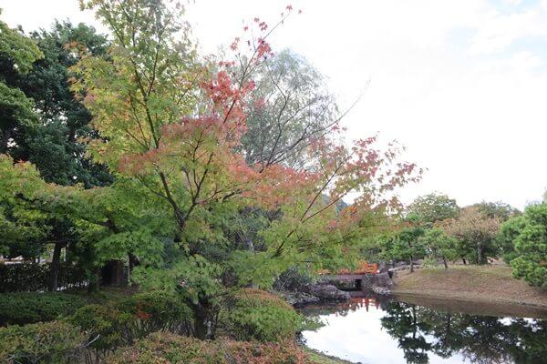 紫式部 公園 お 土産