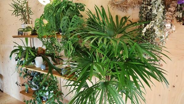 店内の観賞植物
