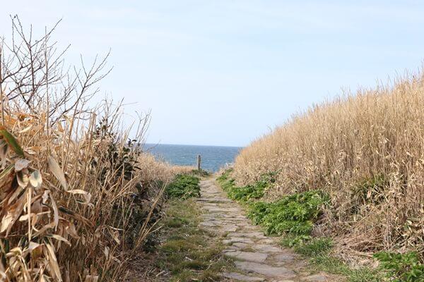 島の反対側