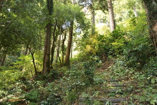四方谷コースの登山道