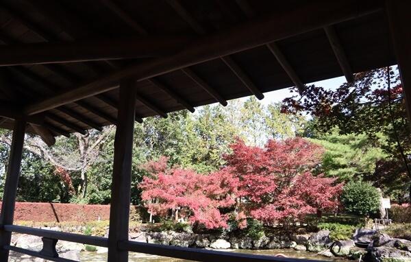 茶室から眺めた景色