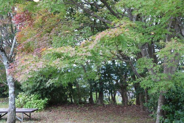足羽山の紅葉