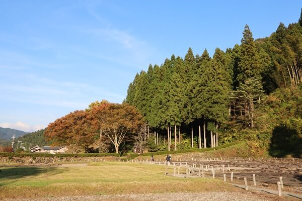 唐門の左側 奥の木