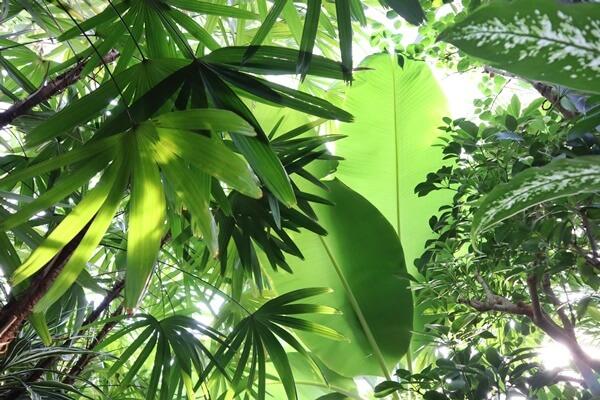 店内のジャングル