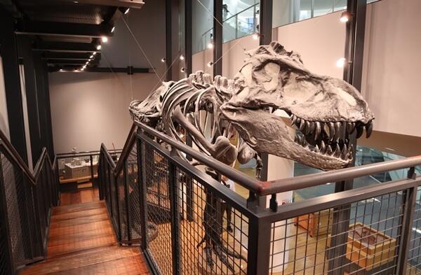 化石の模型