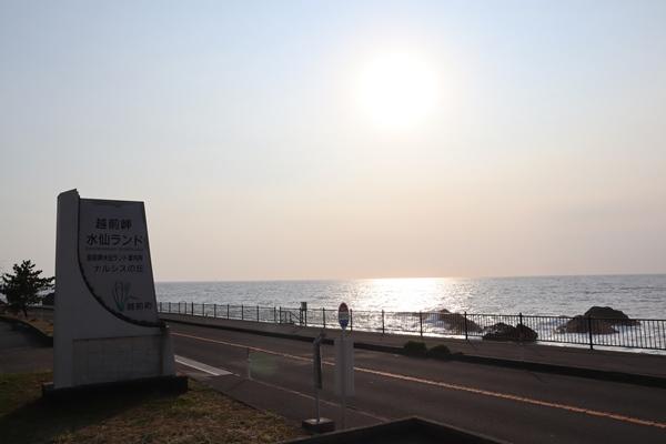 越前岬の水仙ランド
