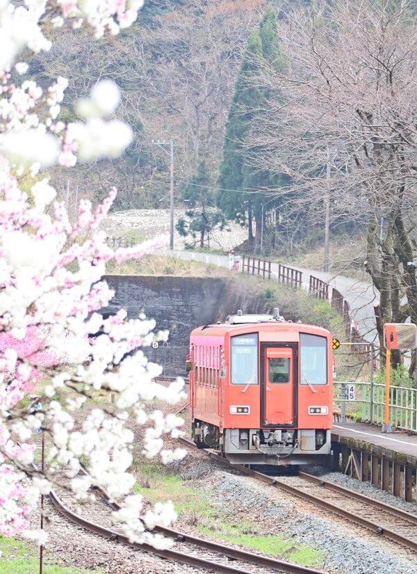 勝原駅と電車