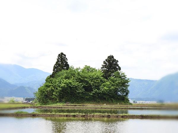 田んぼの中の猫島
