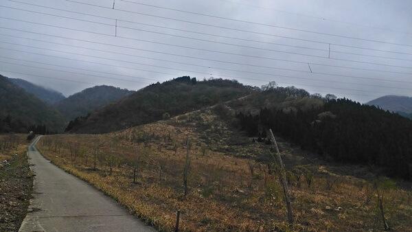勝原コース登山道