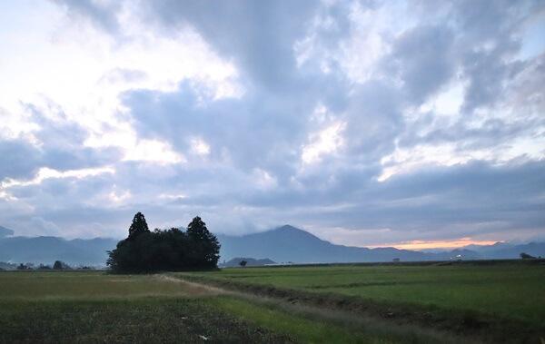稲刈り後の猫島