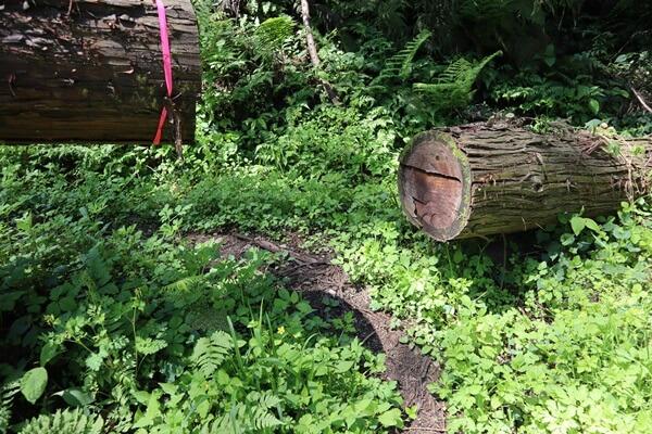 倒木が多い