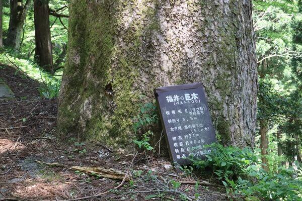 福井の巨木ベスト100