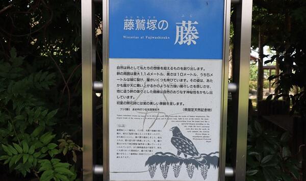 藤鷲塚のフジの案内板
