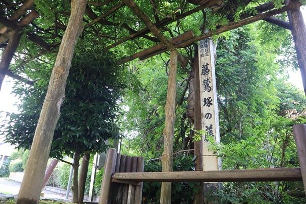 藤鷲塚のフジ