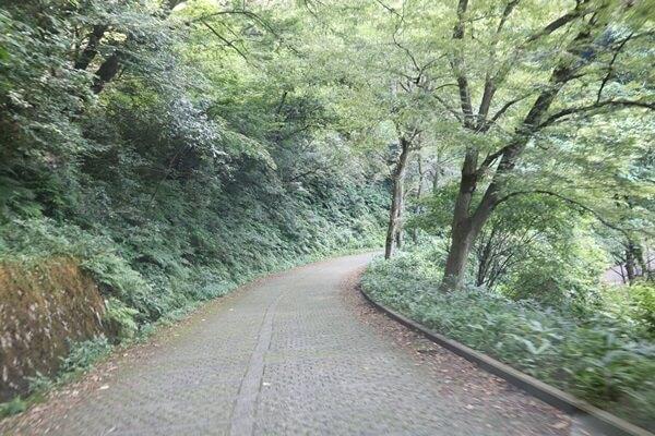 八幡山の道路