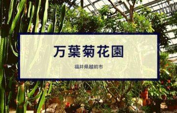 万葉菊花園