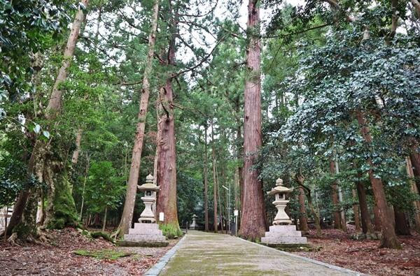 2本の杉の大木