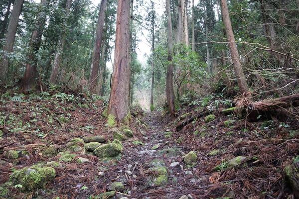 一乗城山の登山道