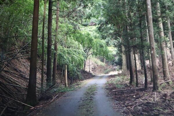 奥の院までの道路