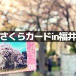 福井の桜カードの配布場所は?【さくら名所15選】