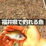 【福井県の防波堤で釣り】春・夏・秋・冬に釣れる魚は?