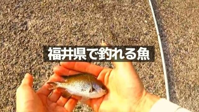 福井県で季節ごとに釣れる魚