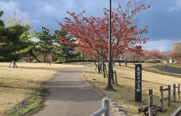 友愛の汐見桜