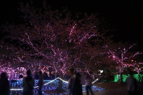 ミライエの桜