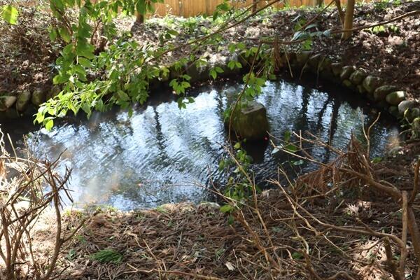 朽飯八幡神社の雨乞池