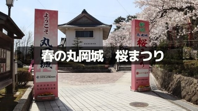 丸岡城の桜まつり