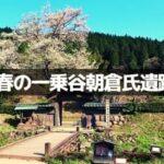 春の一乗谷朝倉氏遺跡