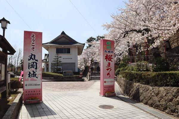 丸岡城の桜祭り