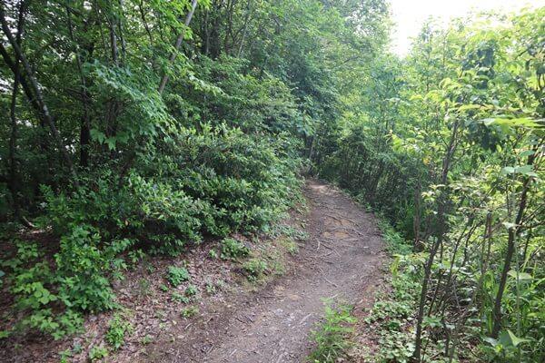石生谷トンネルコースの登山道