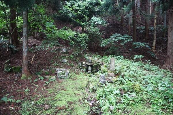 コツラの清水の林